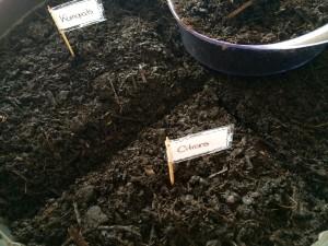Pépins en terre