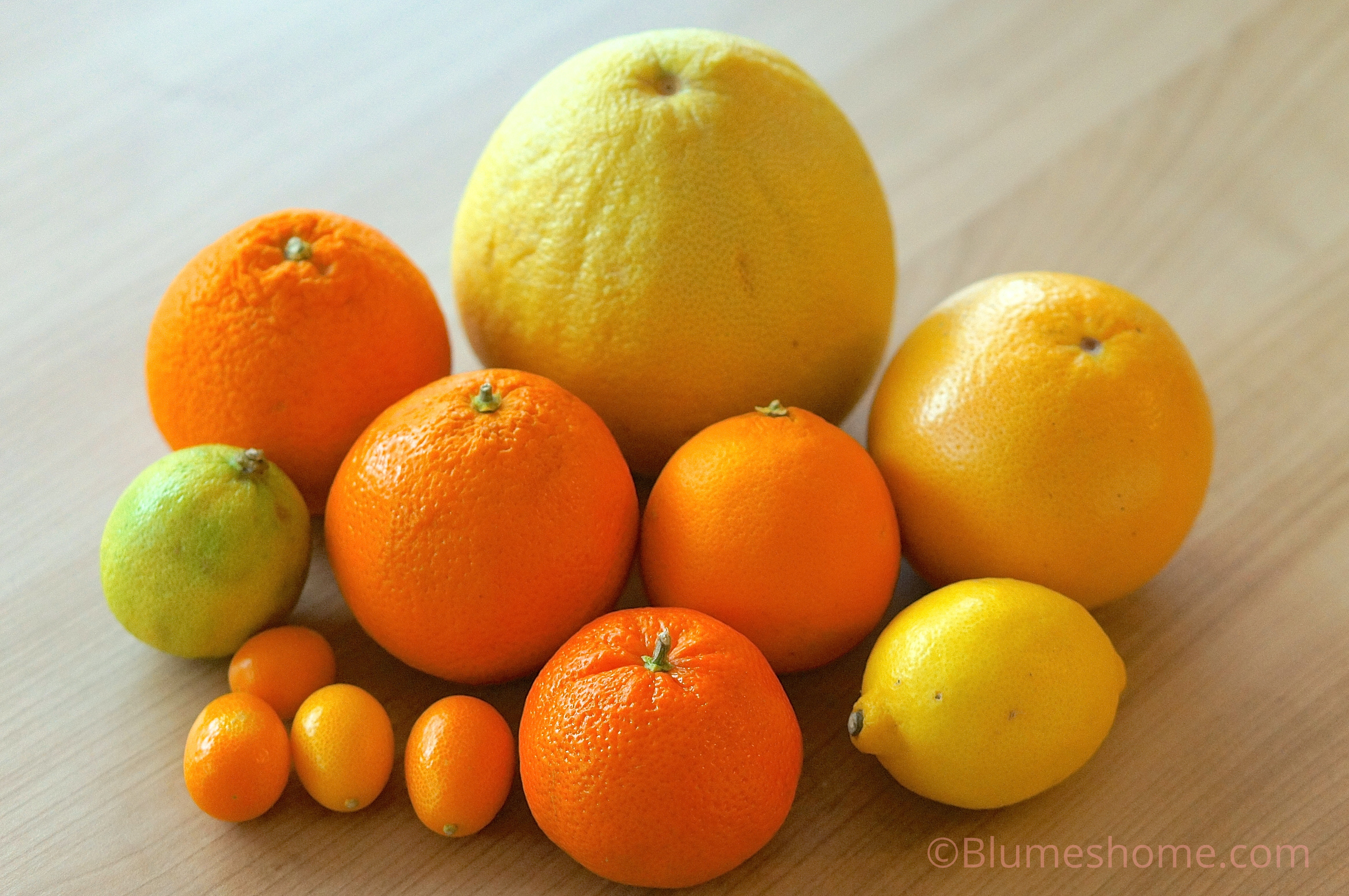 Planter des p pins d agrumes citron orange kumquat et - Planter pepin citron ...