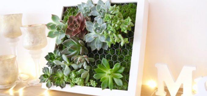 Vidéo DIY – Comment créer un tableau de succulentes – Cadre végétal IKEA
