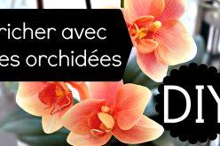 DIY fleurs – Votre orchidée a perdu ses fleurs ? Astuce pour la refleurir !