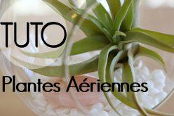 DIY – Plantes aériennes | décoration de tillandsia suspendue