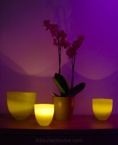 partylite pampa