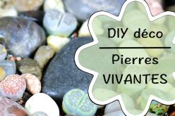 Vidéo DIY – Jardin de pierres vivantes !