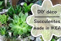 Vidéo DIY jardin de succulentes de chez IKEA