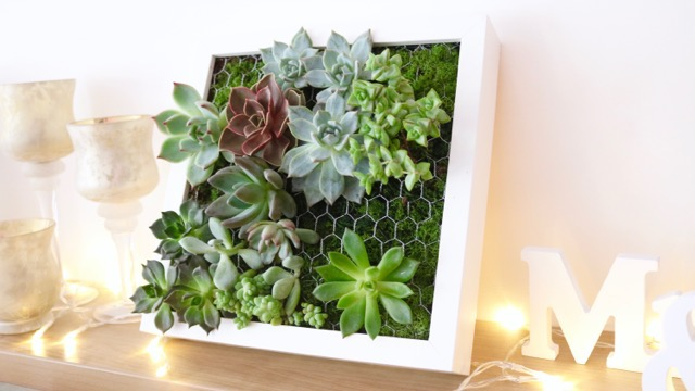 vid o diy comment cr er un tableau de succulentes cadre v g tal ikea. Black Bedroom Furniture Sets. Home Design Ideas