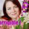 Shopping imprévu : Nouvelles orchidées pour ma collection | mes achats orchidées