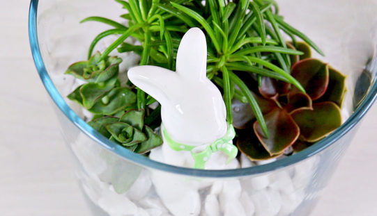 Le jardin de succulentes des Lapins   tutoriels faciles de succulentes – Décoration pour Pâques