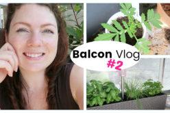 BALCON VLOG – Rempotages, shopping de plantes aromatiques et tissu déco