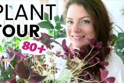 PLANT TOUR 2018 – Ma collection complète de plantes d'intérieur | Plantes vertes et orchidées