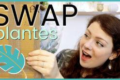 SWAP – On s'envoie des plantes, boutures et cadeaux avec Une fleur parmi les fleurs | Swap Plantes