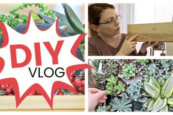DIY VLOG – Comment j'ai créé un arrangement de succulentes dans une caisse | Tutoriel de succulentes