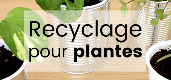 DIY Recyclage créatif – 3 astuces pour vos plantes d'intérieur