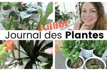 Journal des plantes – Plantes sèches, canicule et floraison | Juillet