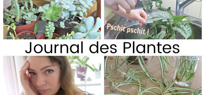 Journal des plantes – Recette du spray anti parasite et bouturer une spider plant | septembre