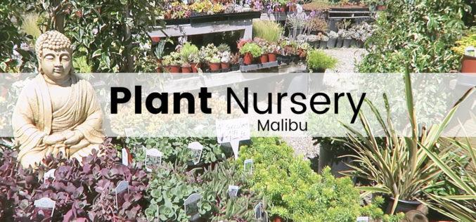 Plant Nursery – Plein de succulentes et de cristaux à Malibu | Shopping plantes en jardinerie