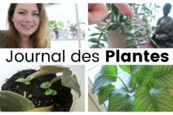 Journal des plantes – Boutures, Nouvelles pousses et fleurs