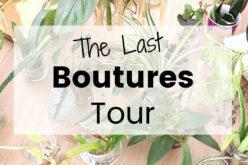 Dernier Bouture Tour – Je vous montre toutes mes boutures de plantes d'intérieur