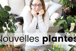 PLANT HAUL – Plantes d'intérieur, begonia, arbre et succulentes ! mes derniers achats en jardinerie