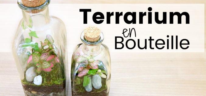 DIY – Comment créer un terrarium en bouteille | Plantes en bocal