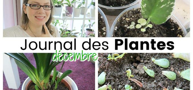 Journal des plantes – Attention chauffage, nouvelles pousses et petits accidents