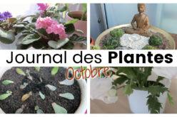 Journal des plantes – Fleurs d'intérieur, succulentes et retour de l'extérieur | Plant Life