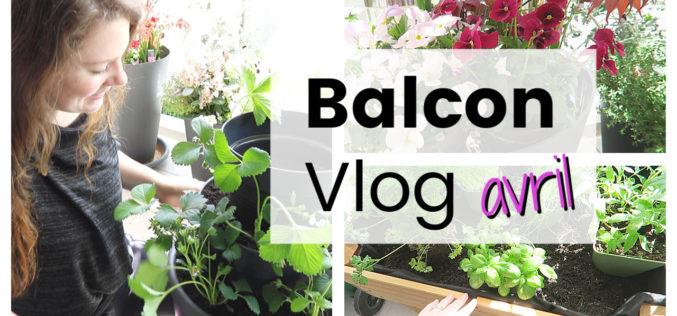 BALCON VLOG – Tour de fraises DIY, potager surélevé, repiquer les semis