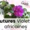 Guide – Comment faire des boutures de violettes africaines