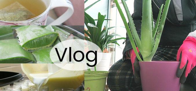 VLOG – Violettes en fleurs, shopping, livres, yaourt maison et jardinage