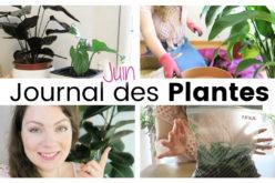 Journal des plantes – Plante géante, sachets de bouturage et rempoter la fleur de lune