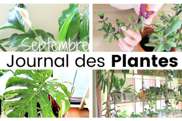 Journal des plantes – Plans d'automne, bouturages, rempotages et taille d'arbre de jade