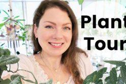 PLANT TOUR 2020 – Ma collection complète de plantes d'intérieur