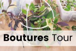 Boutures Tour – Je vous montre toutes mes boutures de plantes d'intérieur