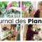 Journal des plantes – Réorganisation de la plantagère, anti mouches et nettoyages