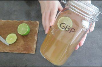 Ginger Beer Plant : Comment faire du Ginger Beer avec du GBP, la bière de gingembre maison